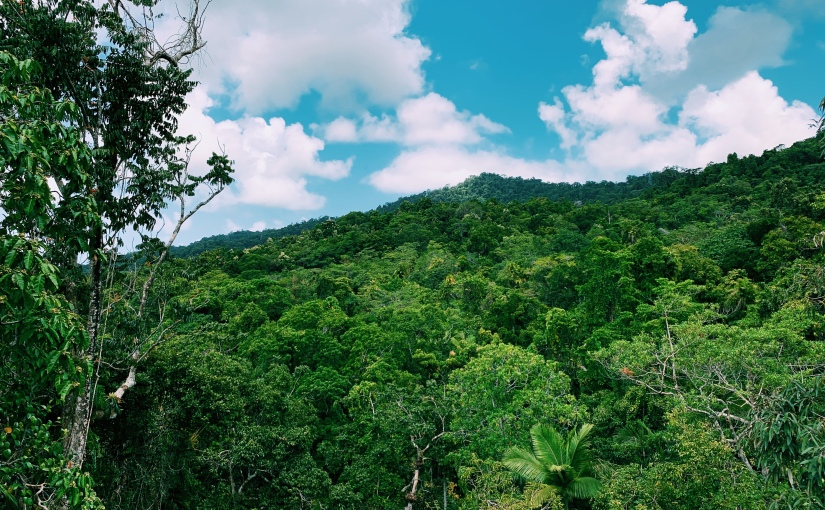 A day trip to Daintree National Park and CapeTribulation